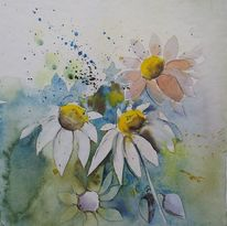 Zart, Kamille, Blüte, Blütenaquarell