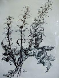 Schwarz weiß, Federzeichnung, Tusche, Pflanzen