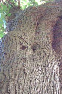 Natur, Fotografie, Körperlich, Baum