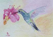 Kolibrie, Blüte, Vogel, Zeichnung