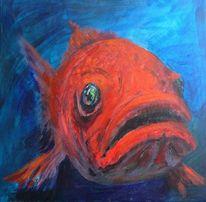 Augen, Tauchen, Unterwasser, Fisch
