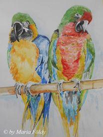 Papagei, Tiere, Dekoration, Vogel exotik