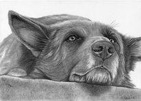 Hund, Grafit, Zeichnung, Portrait