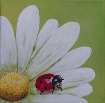 Blumen, Tiere, Blüte, Marienkäfer