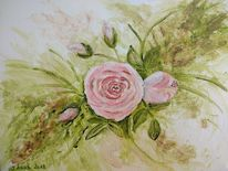 Pflanzen, Blumen, Rose, Rosa