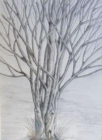 Baum, Zweig, Äste, Natur