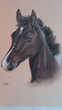 Zeichnung, Pastellmalerei, Pferd fohlen, Portrait