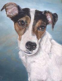 Schecke, Australien, Terrier, Pastellmalerei