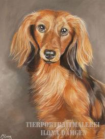 Hundeportrait, Hund, Langhaardackel, Pastellmalerei