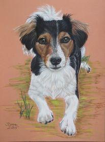 Pastellmalerei, Russel, Terrier, Hundeportrait