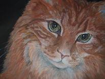 Rot, Katze, Kater, Tierportrait