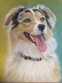 Grenze, Portrait, Pastellmalerei, Collieaussie