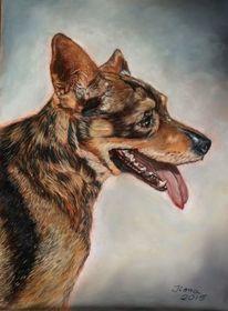 Schäferhund, Hundeportrait, Pastellmalerei, Kreide