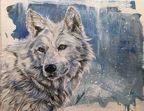 Weiß, Schnee, Wildtier, Portrait
