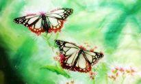 Blumen, Schmetterling, Sommertraum, Natur