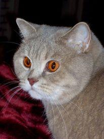 Portrait, Katzenaugen, Katze, Tiere