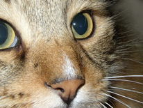 Katzenaugen, Katze, Tiere, Fotografie