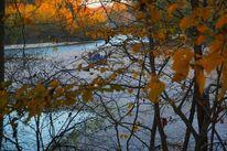 Strauch, Glühen, Herbst, Dämmerung