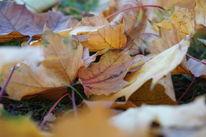 Blätter, Herbst, Laub, Beige
