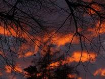 Schatten, Baum, Wolken, Dämmerung