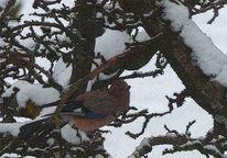 Schnee, Märchenvogel, Winter, Baum