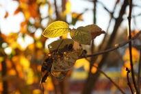 Herbst, Dämmerung, Laub, Glühen