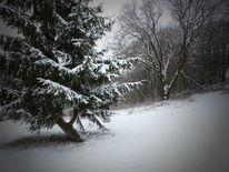 Fichte, Schnee, Winter, Baum