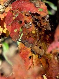 Loch, Herbst, Laub, Fotografie