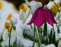 Fotografie, Paar, Schnee
