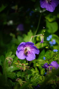 Frühling, Blüte, Gartenstück, Biene