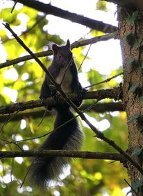 Baum, Äste, Eichhörnchen, Fotografie