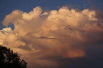 Wipfel, Blau, Wolken, Abendrot