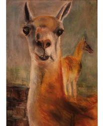Zeichnung, Portrait, Lama, Stehen