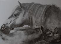 Bleistiftzeichnung, Tiere, Natur, Zeichnungen