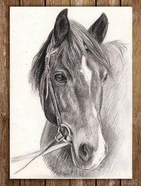 Bleistiftzeichnung, Pferde, Kopf, Zeichnung