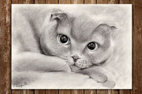 Bleistiftzeichnung, Tierzeichnung, Katzenzeichnung, Portraitzeichnung