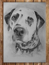 Dalmatiner, Hund, Tier, Zeichnungen