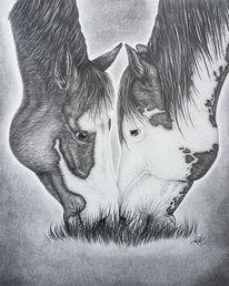 Pferde, Schön, Lebewesen, Liebe