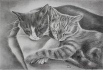 Katze, Bleistiftzeichnung, Tiere, Grafit