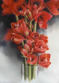 Pflanzen, Amaryllis, Blumen, Aquarell