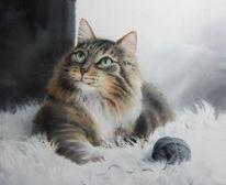 Tiere, Kater, Katze, Aquarell