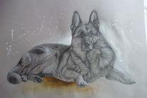 Karton, Hund, Zeichnung, Bleistiftzeichnung