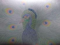 Bunt, Vogel, Pfau, Zeichnungen