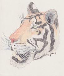 Zeichnung, Tiger, Raubtier, Bunt