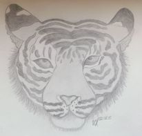 Tiger, Katze, Schwarz weiß, Zeichnungen