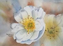 Aquarellmalerei, Blumen, Buschwindröschen, Aquarell