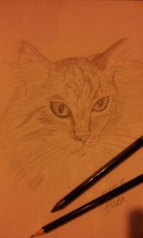 Portrait, Katze, Zeichnung, Zeichnungen