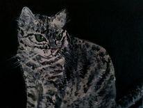 Tiere, Katze, Grau, Malerei