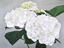 Blüte, Hortensie weiß, Fotorealismus, Ölmalerei