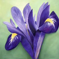 Lila, Blumen, Malerei, Iris
